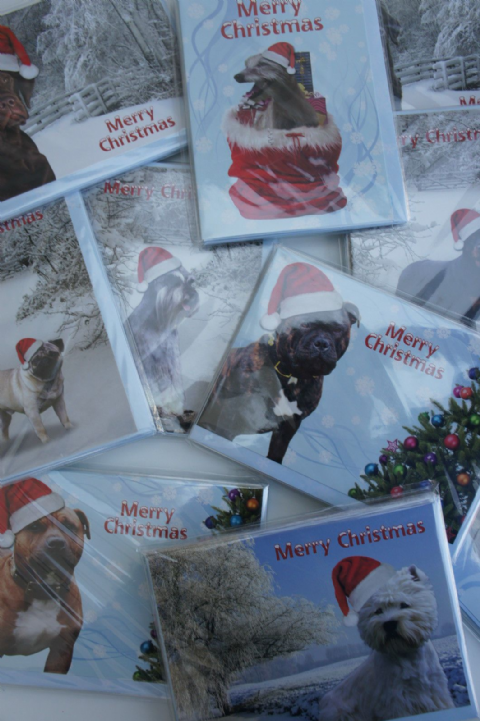 DOG BREED CHRISTMAS CARDS MANY BREEDS TO CHOOSE FROM - WESTIE,DALMATION,PUG,LAB ETC